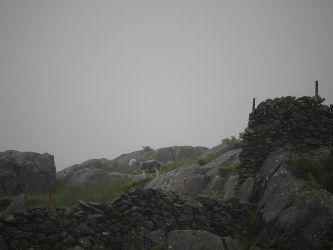 Nebel / Fog