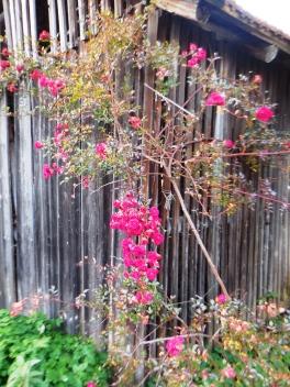 Blüten in Hausen