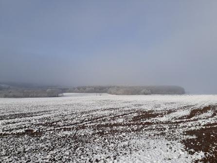 1_Nebel